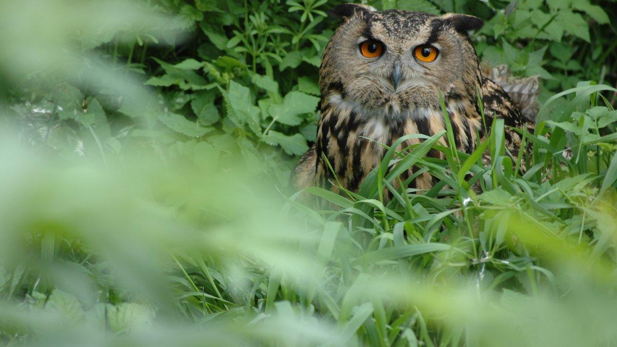 Parco faunistico di Assling, © Erlebniswelt/Wildpark Assling