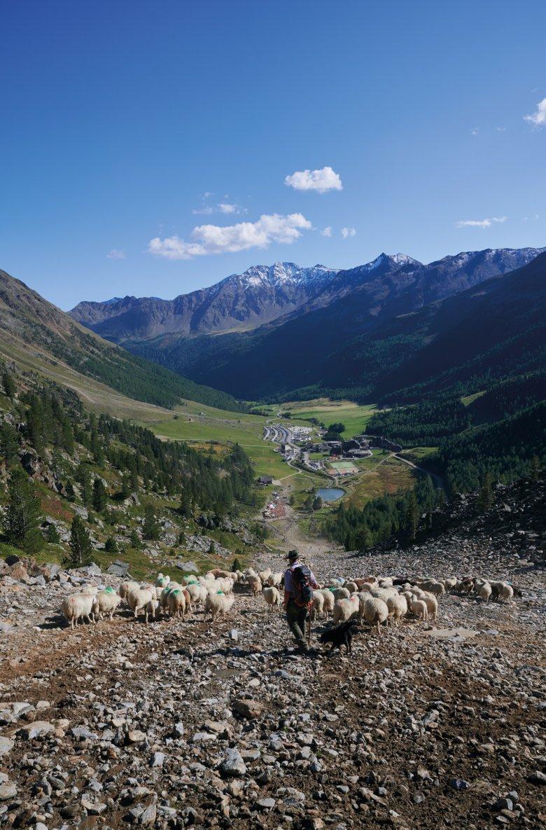 Il lavoro sembra finito ma non lo è: prima di andare a letto bisogno ancora contare le pecore