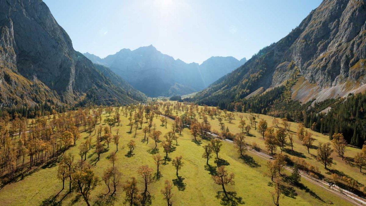 Grande bosco d'aceri, © Tirol Werbung