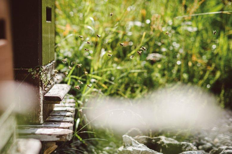 SOPRA Massima attività alla buca d'ingresso: le api rientrano dal loro giro cariche di nettare e polline.
