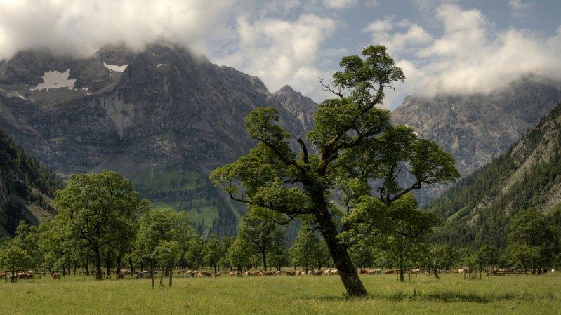 La grande Aceraia, © Alpenpark Karwendel