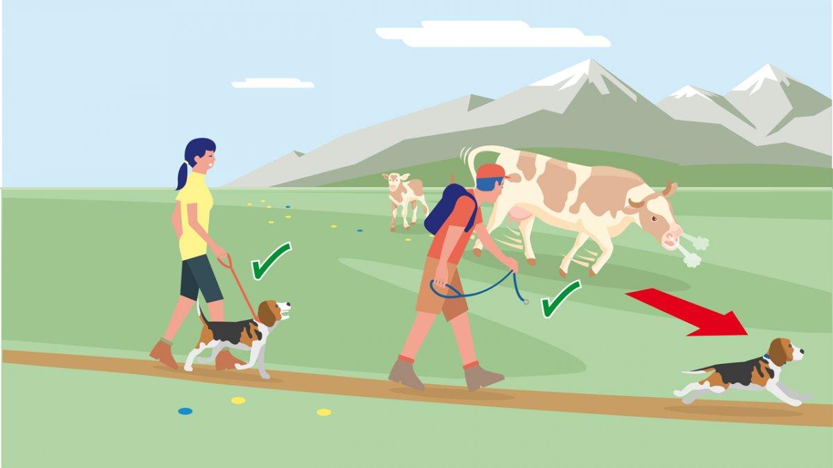 Il comportamento adatto 4, © Landwirtschaftskammer Tirol