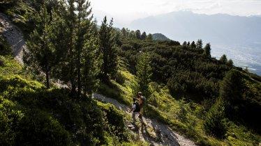 Il Sentiero dei pini cembri, © Region Hall-Wattens/Daniel Zangerl
