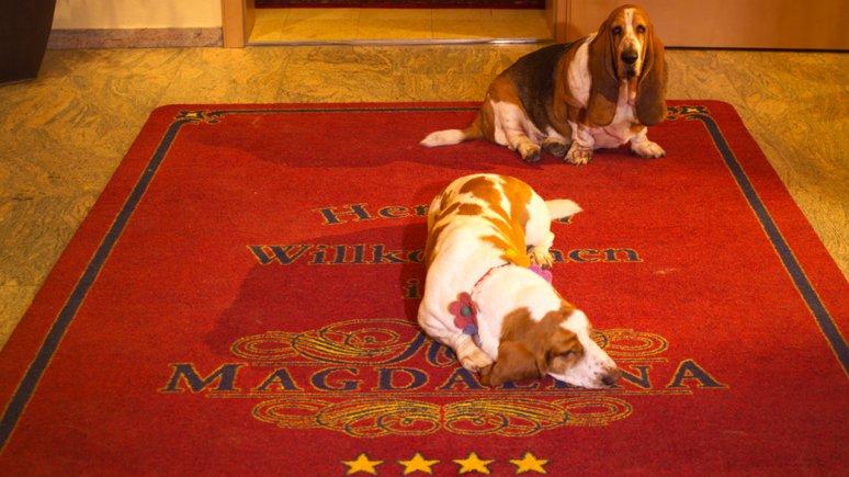 Hotel Magdalena - vacanze di puro relax con il vostro cane, © Hotel Magdalena