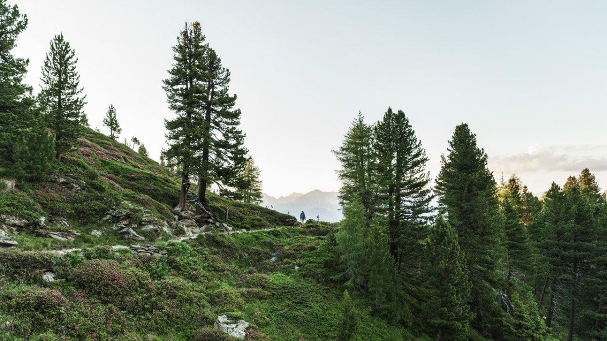 Sul sentiero Zirbenweg