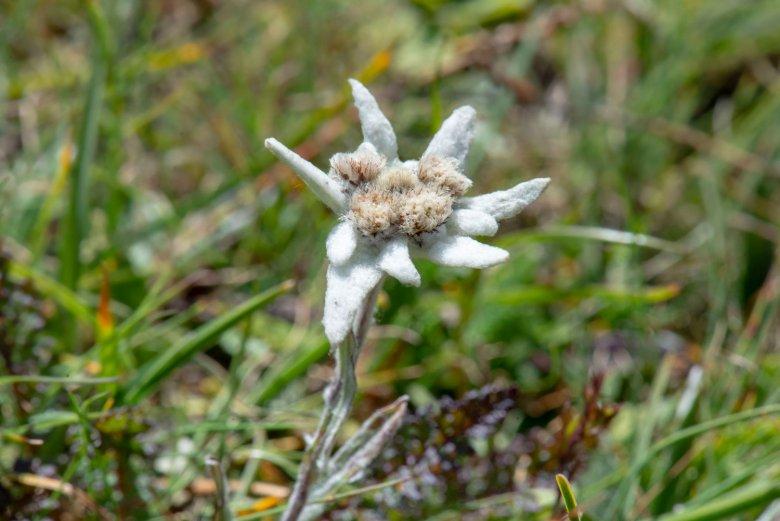 Pannelli informativi aiutano a identificare le numerose specie di piante. , © Tirol Werbung, Angela Fuchs