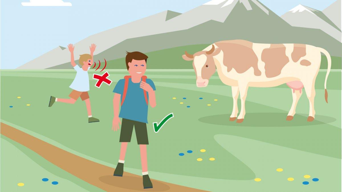 Il comportamento adatto 2, © Landwirtschaftskammer Tirol