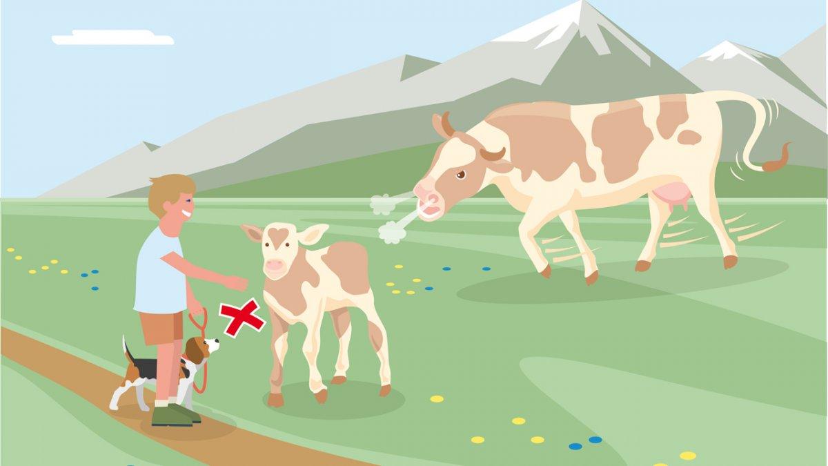 Il comportamento adatto 3, © Landwirtschaftskammer Tirol