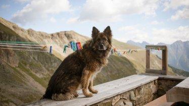 Il cane in montagna, © Jens Schwarz
