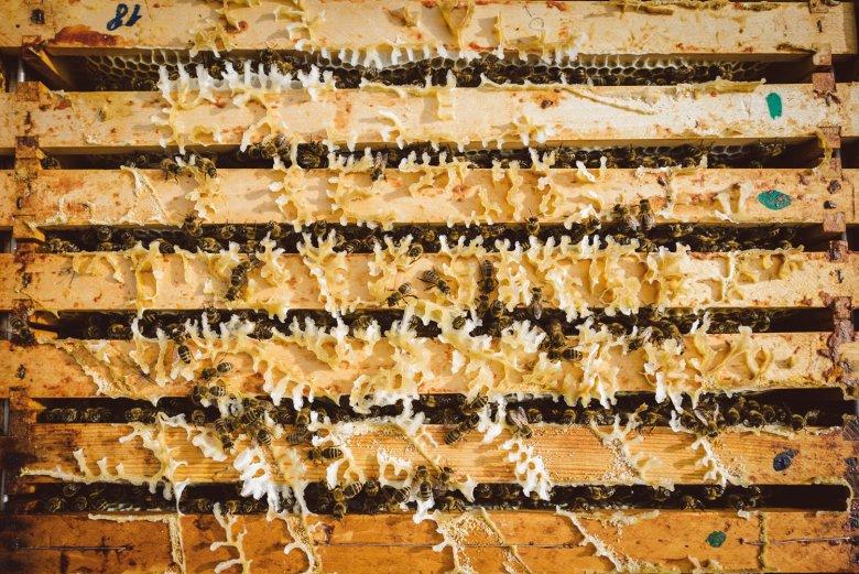 Vista dall'alto sull'alveare. L'apicoltore può dire quanti anni ha il favo in base ai punti verdi.