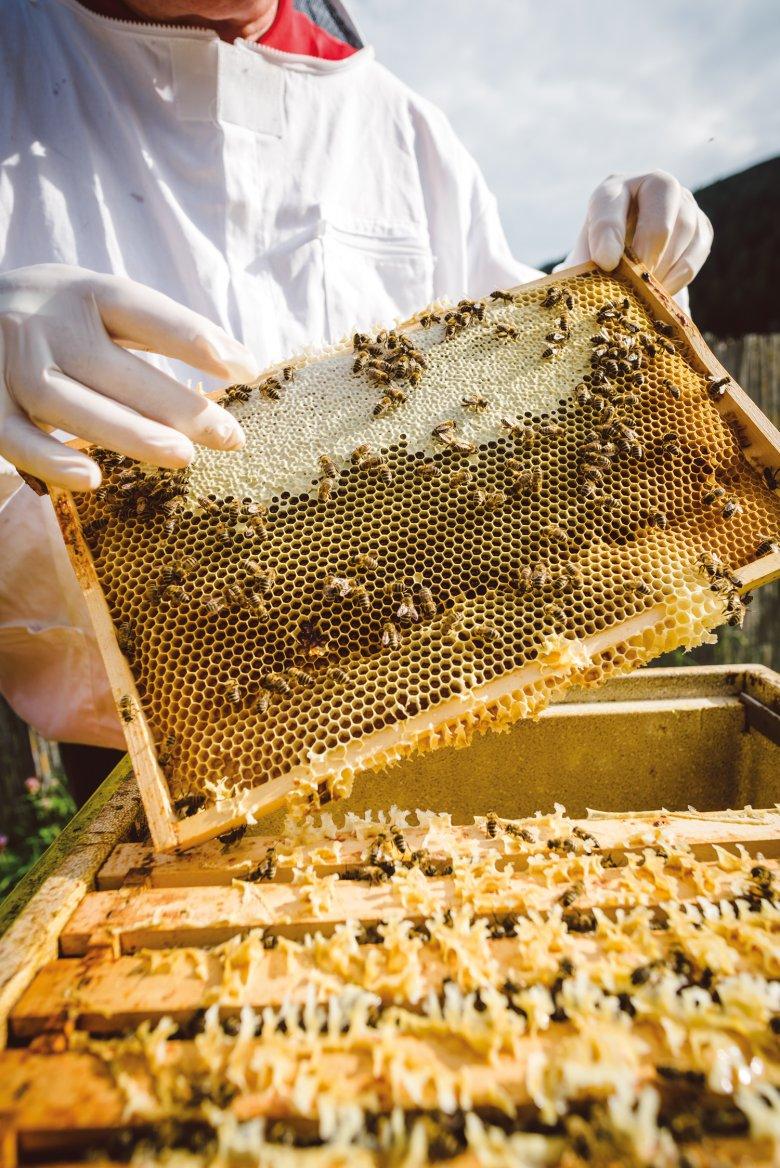Un unico favo. Quando un terzo delle celle è chiuso, il miele è maturo.