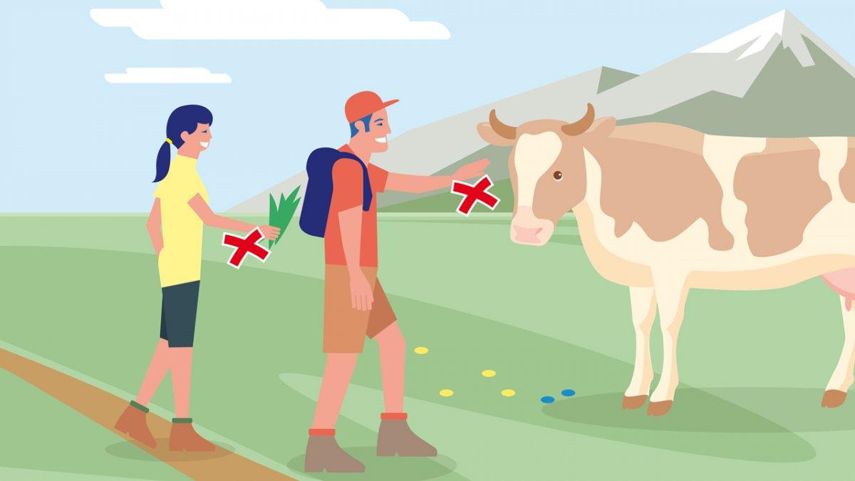 Il comportamento adatto 1, © Landwirtschaftskammer Tirol