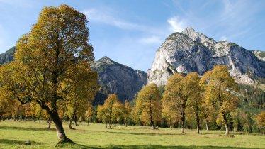 L'aceraia del parco naturale Karwendel, © Silberregion Karwendel