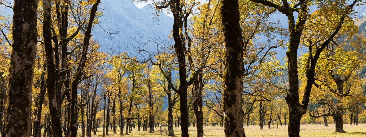 Grande bosco d'aceri, © Tirol Werbung/W9 STUDIOS