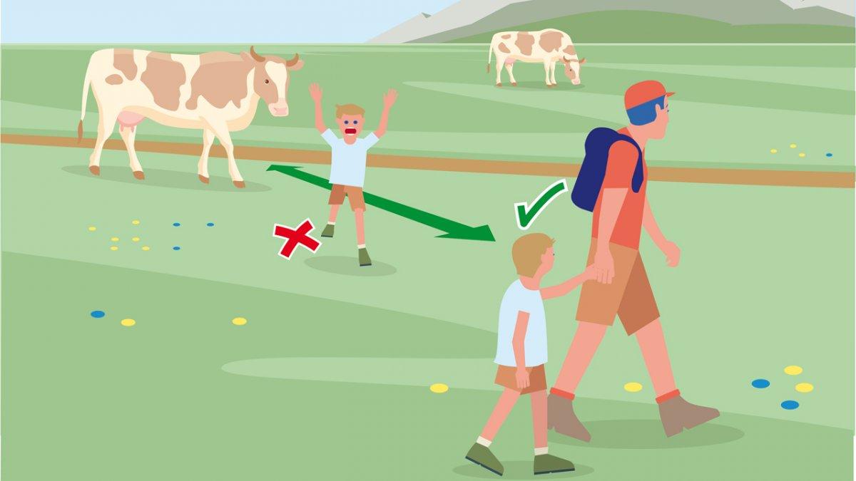 Il comportamento adatto 7, © Landwirtschaftskammer Tirol